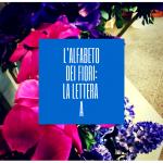 L'alfabeto dei fiori: la lettera A