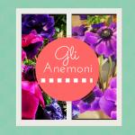 Il fiore di oggi: gli anemoni