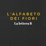 L'alfabeto dei fiori: la lettera B