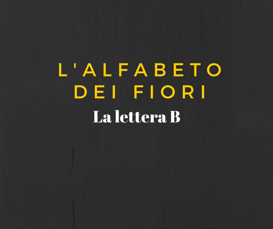 L 39 alfabeto dei fiori la lettera b for La b b