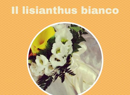 Il lisianthus bianco 3 motivi per utilizzarlo