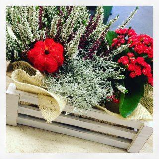 Cassetta di legno con piante autunnali