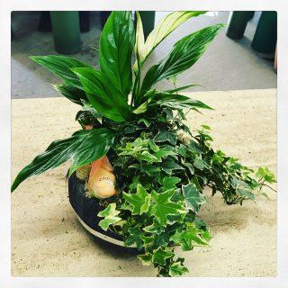 Spatifillum ed edera una composizione di piante in una tinozza di legno