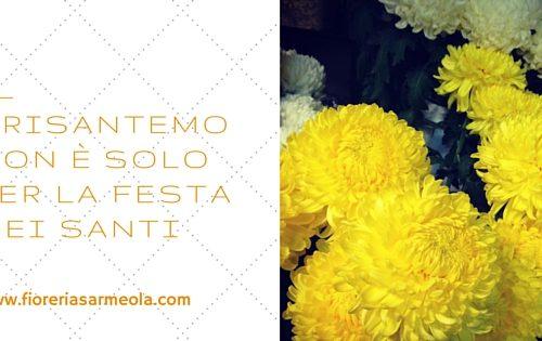Il crisantemo non è solo per la Festa dei Santi