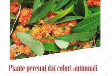 Piante perenni dai colori autunnali