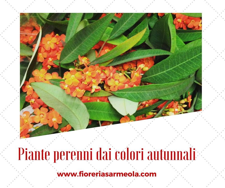 Piante perenni dai colori autunnali for Piante perenni