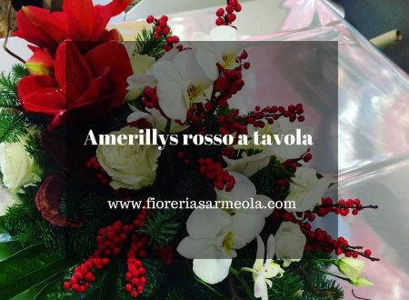Amarillys rosso a tavola