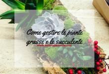 Come gestire le piante grasse e le succulente