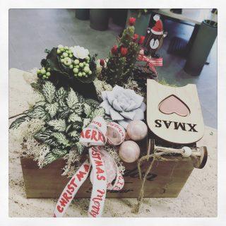 Composizione di succulente per Natale