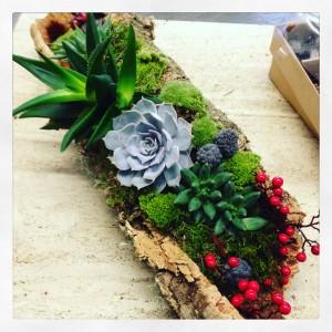 succulente su tronco in sughero