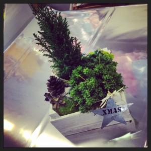 composizione di succulente verdi con pino