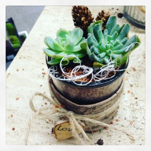 Idea regalo con piante per Natale