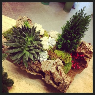 composizione con succulente e sughero