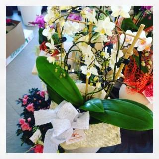orchidee Festa della Mamma