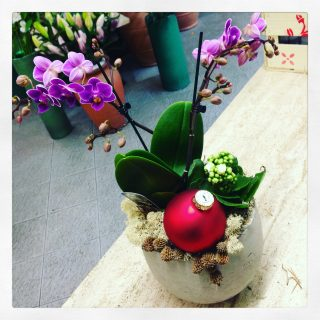 Orchidee a Natale con calanchoe