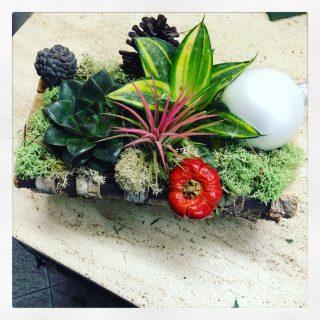 composizione con succulente e piante grasse