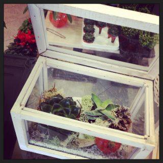 composizione con succulente e piante grasse Terrarium