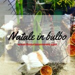 Natale in bulbo