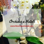 Orchidee a Natale