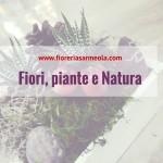 Fiori, piante e Natura