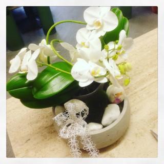 orchidea in vaso di pietra