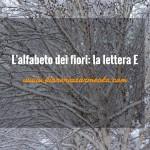 L'alfabeto dei fiori: la lettera E