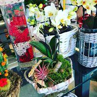 mini orchidee per San Valentino