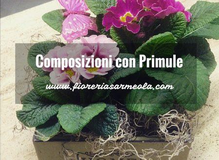 Composizioni con Primule