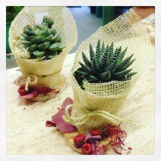 succulente in stile Shabby Chic