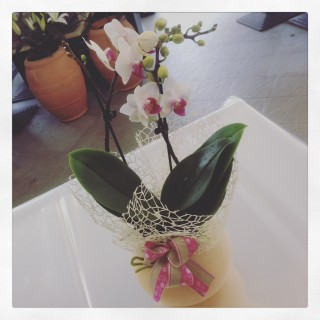 orchidea phalaenopsis con lanterna di cera