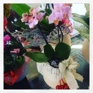 orchidea Phalaenopsis con lanterna di cera San Valentino
