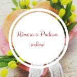 Mimosa a Padova online