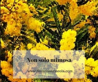 Non solo mimosa