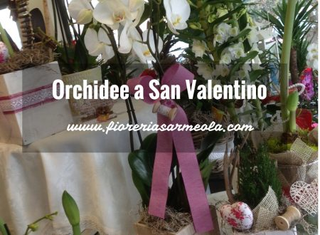 Orchidee a San Valentino