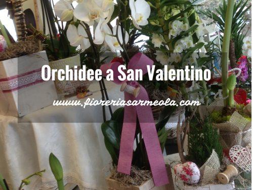 Orchidee a San Valentino