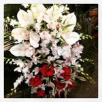 cuscino-orchidea