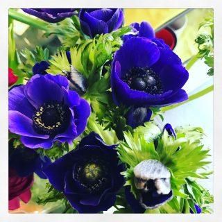 anemoni blu