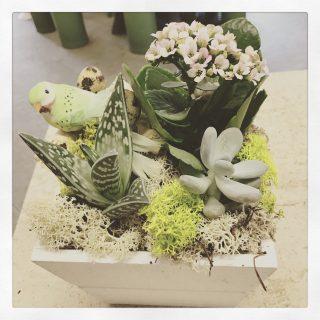 composizione con succulente