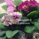 Le quattro stagioni di fiori: la primavera