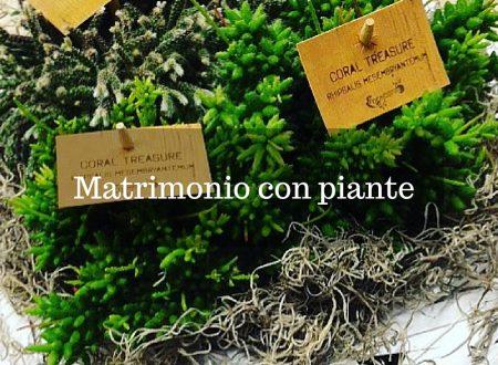 Matrimonio con piante