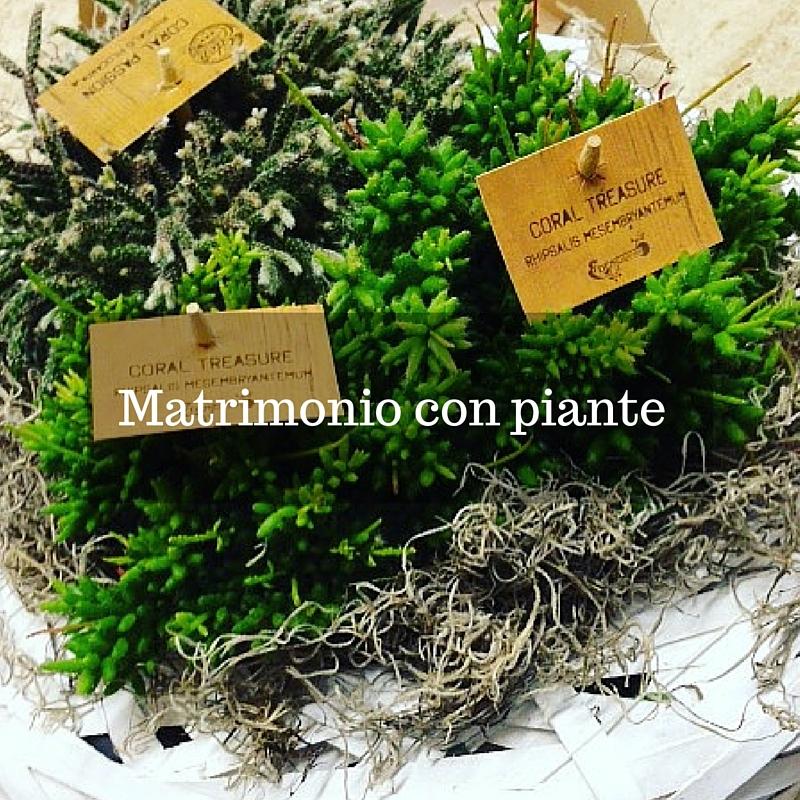 Matrimonio con piante idee fiorite for Pianta con la i