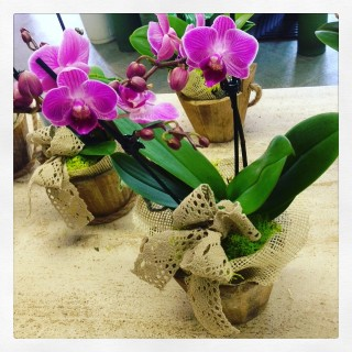 orchidea in stile shabby chic
