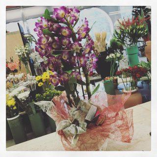 Regalare un orchidea a Natale