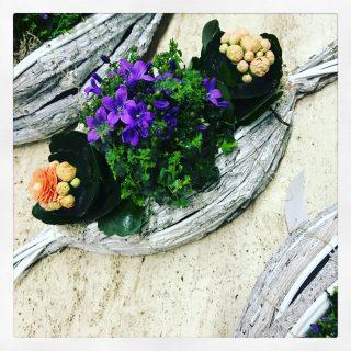 Composizione di piante su supporto a forma di caramella