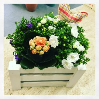 Composizione di piante in cassetta