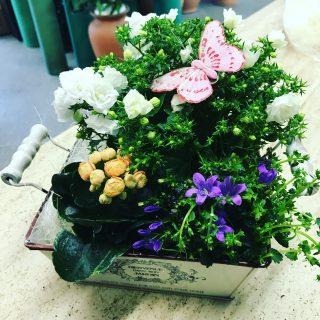 Centrotavola di piante in stile Shabby Chic