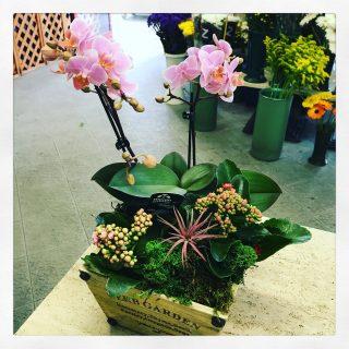 Composizione di piante