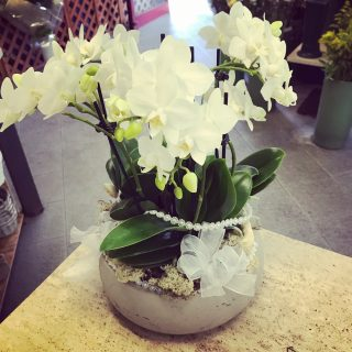 Composizione con mini orchidee