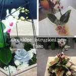 Orchidee: istruzioni per l'uso