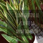 Come gestire le piante da appartamento senza l'iPhone